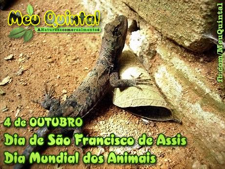 Dia Mundial dos Animais!