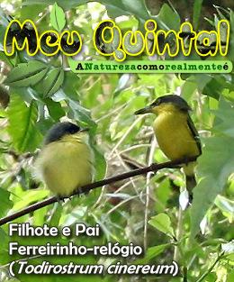 Meu Quintal - Natureza